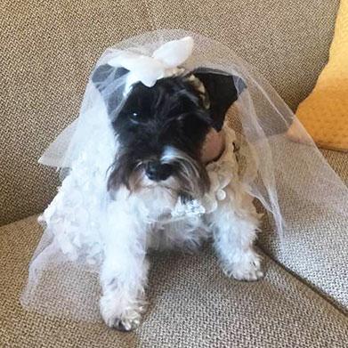 slide-molly-bride